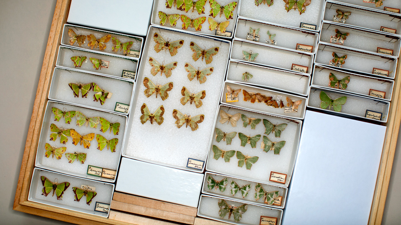 a display case with pinned butterfly and moth specimens