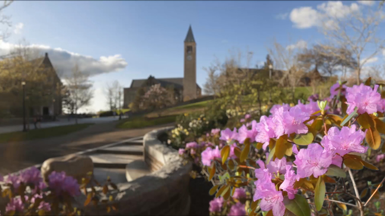 Animation of flowers with McGraw Tower in the background