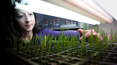 student researcher checks on seedlings under lights in the lab