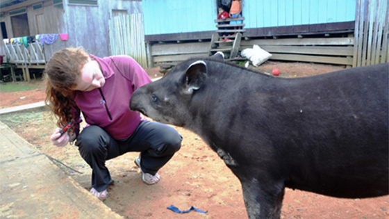 student examines a tapir