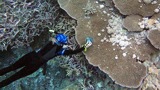 Drew Harvell takes photographs coral underwater